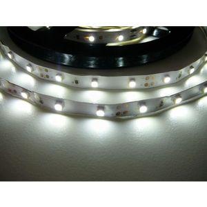 T-LED LED pásek 4, 8W/m 12V bez krytí IP20 Economy Barva světla: Studená bílá 07145 obraz