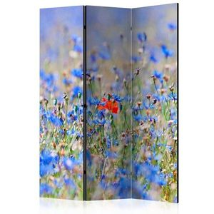 Paraván A sky-colored meadow - cornflowers Dekorhome 135x172 cm (3-dílný) obraz