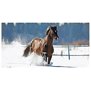 Dekor skleněný - kůň 30/60 obraz