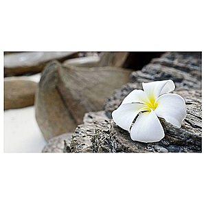 Dekor skleněný - květ na skále 30/60 obraz