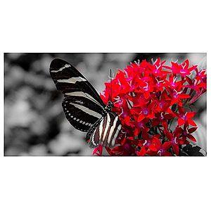 Dekor skleněný - motýl 30/60 obraz