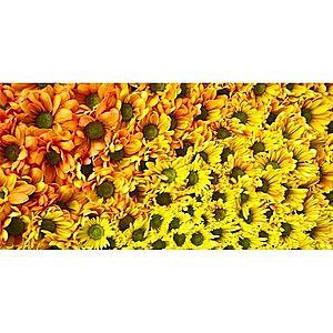 Dekor skleněný - žluté květy 30/60 obraz