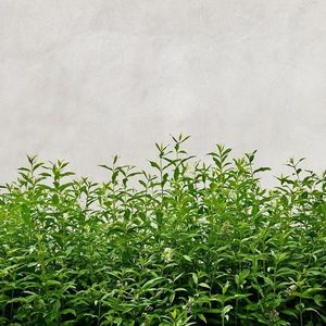 Skleněný panel 60/60 Concrete Herbs Esg obraz
