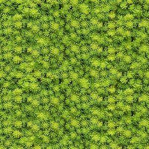 Skleněný panel 60/60 Evergreen-2 Esg obraz