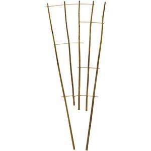 Bambusový žebřík obraz