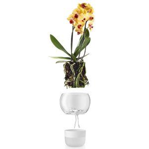 Samozavlažovací skleněný květináč na orchidej O15cm , eva solo obraz