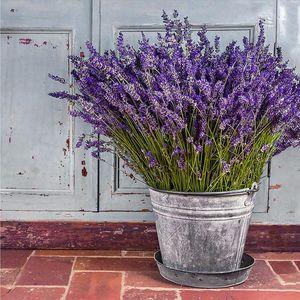 Monee OBRAZ NA SKLE, květiny, 30/30 cm obraz